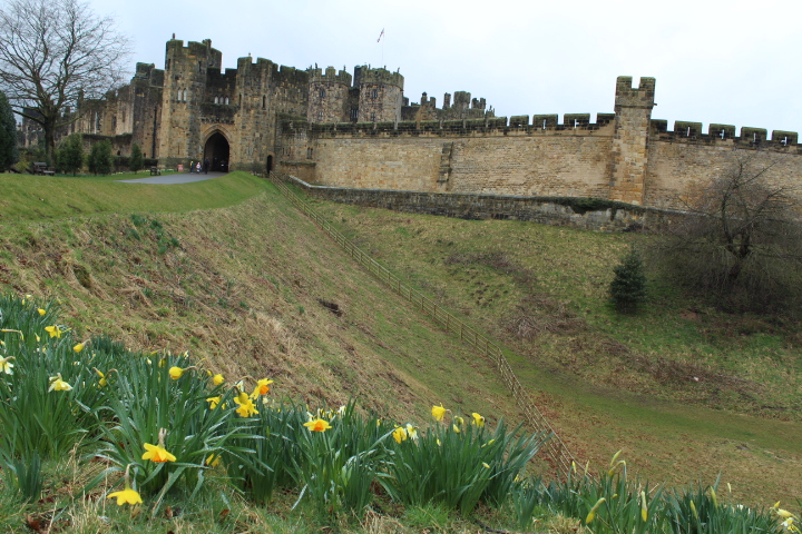 Alnwick Castle grounds and daffodiles