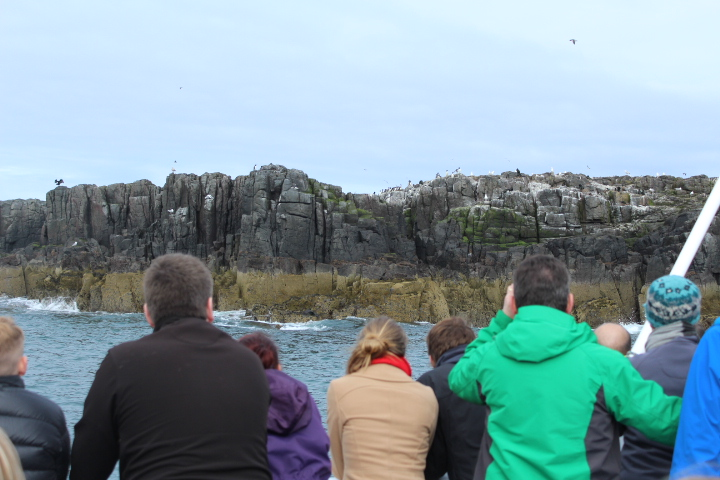 Boat trip to the Farne Islands Northumberland