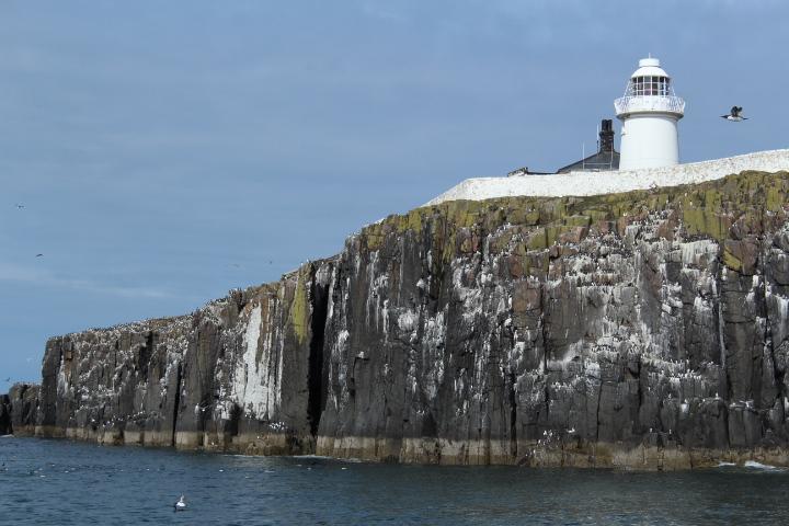 Inner Farne, Farne Islands, Northumberland
