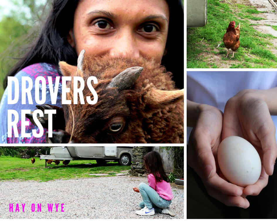 Family and farm animals at drovers rest glamp site, hay on wye