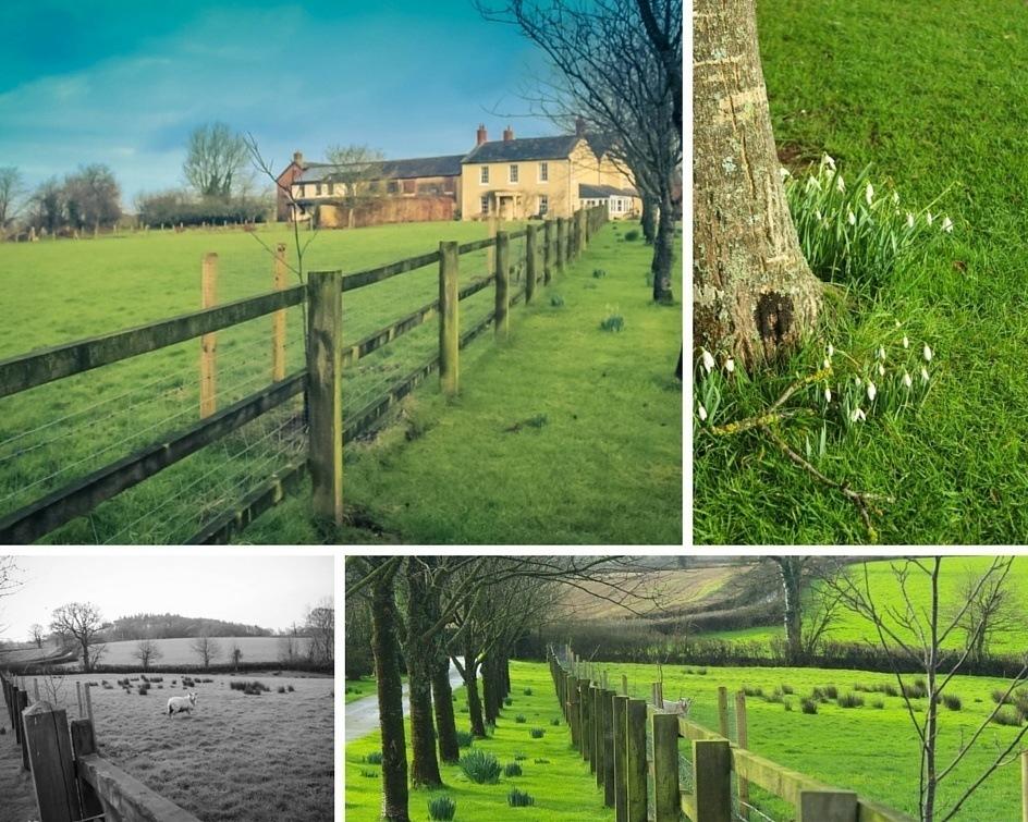 Collage of Larkebear Grange, Devon