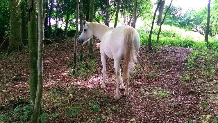 Equine-earth-2