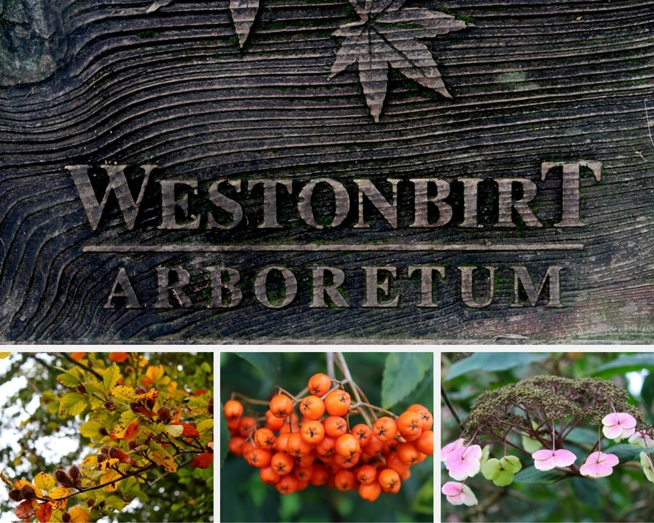Westonbirt Arboretum in October Holidays