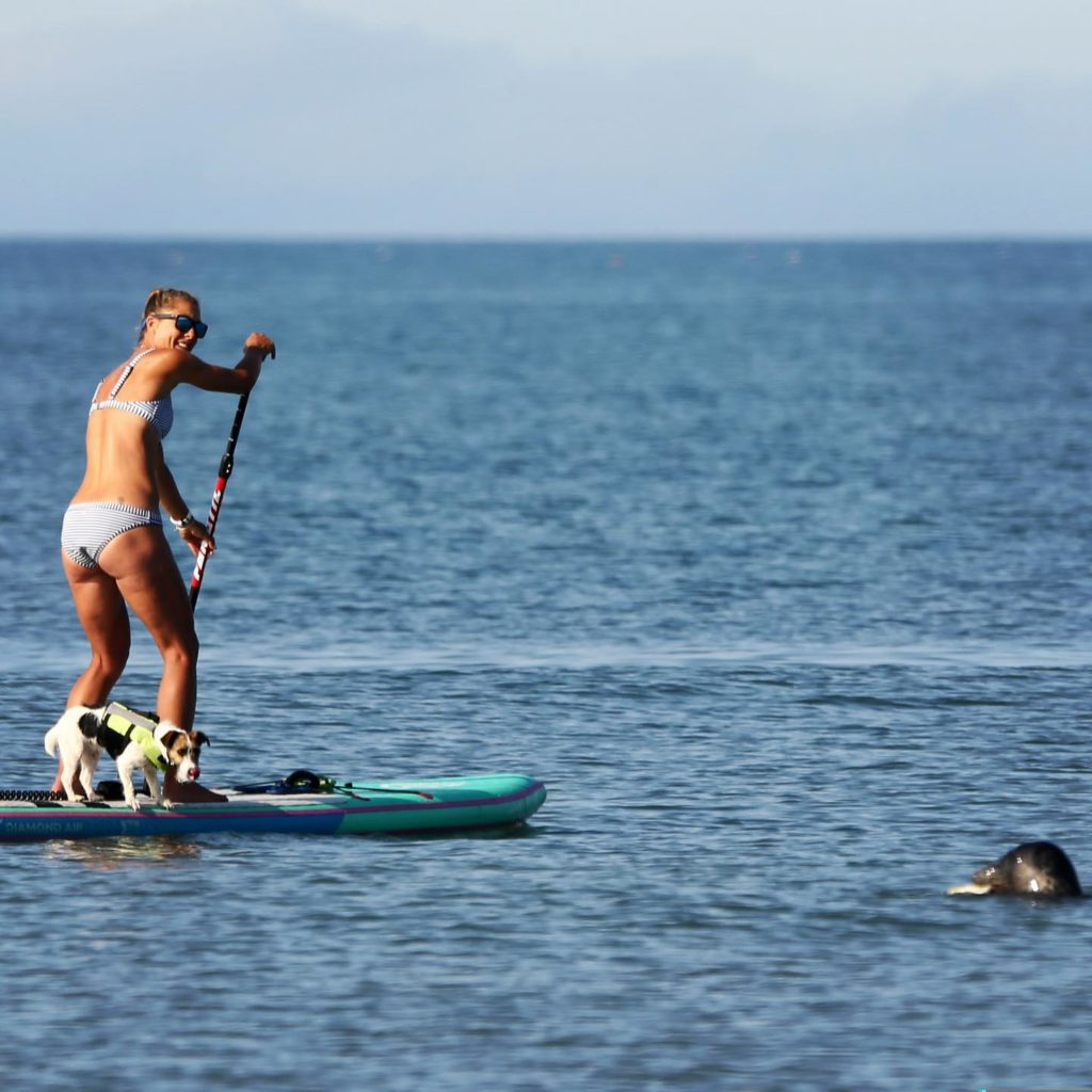 Things-to-do-in-lyme-regis SUP instructor on board with seal