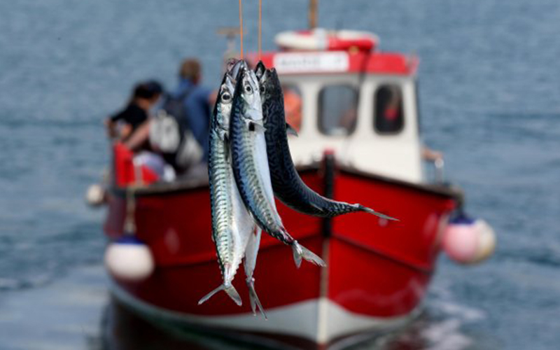 Things-to-do-in-lyme-regis: Harry May Mackerel Fishing trip mackerel catch