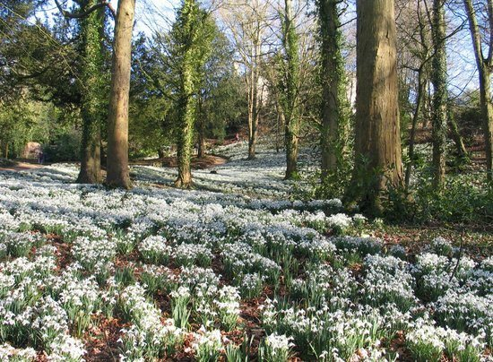 painswick-rococo-garden