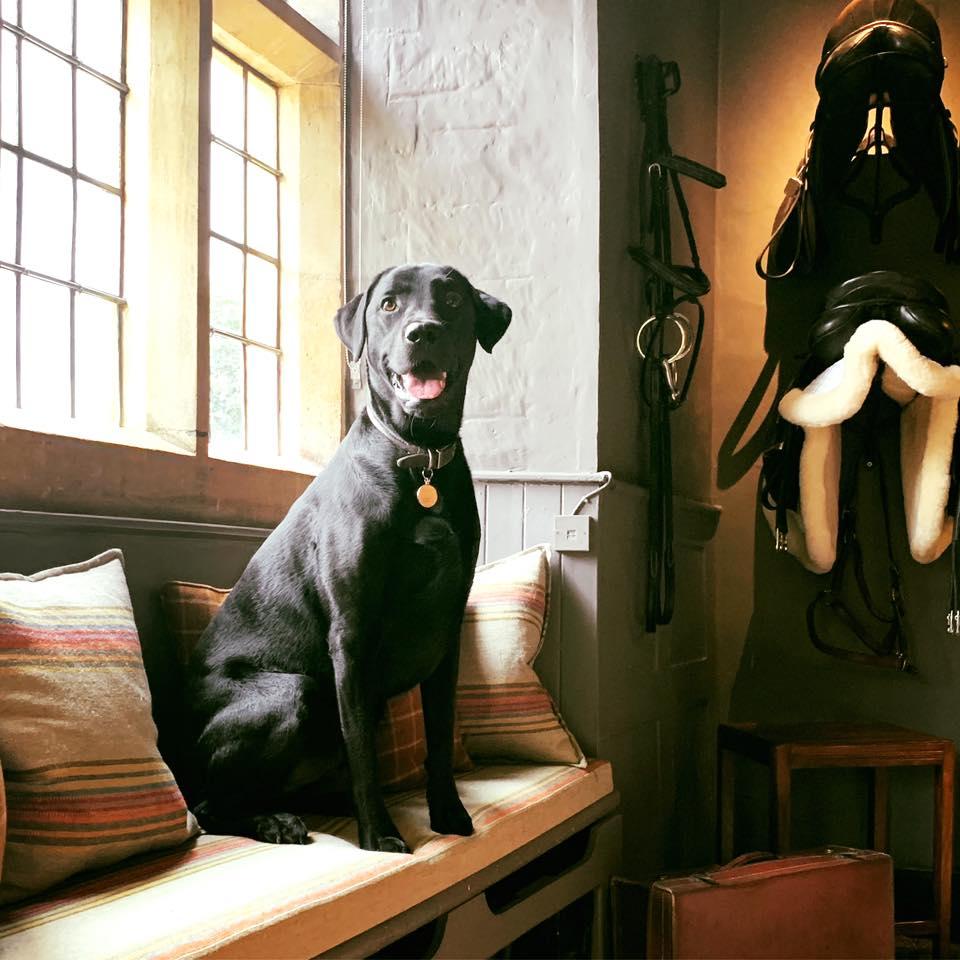 dog sat inside lygon arms cotswolds