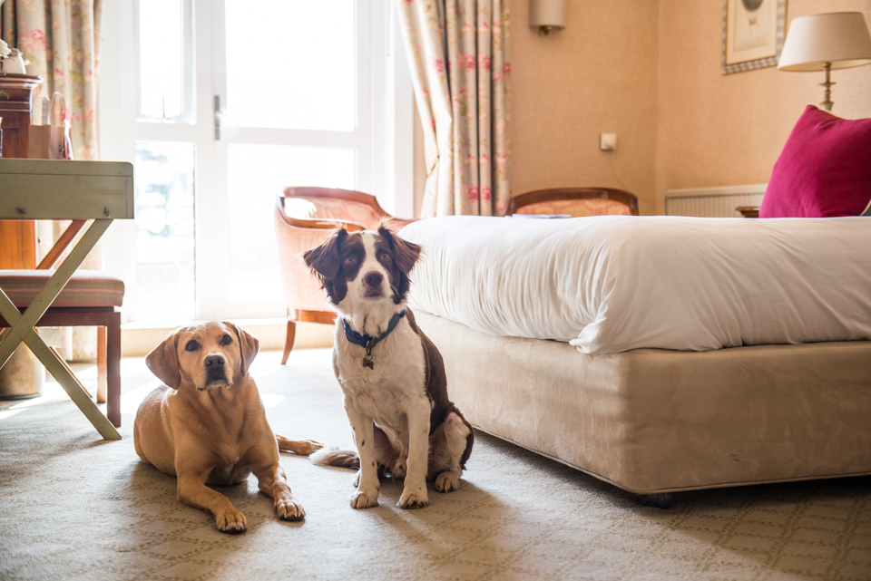 Thurlestone Hotel, Devon, dog-friendly rooms