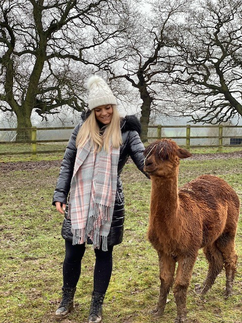 alpaca walking uk at Middle England Farm, Warwickshire - stroking an alpaca