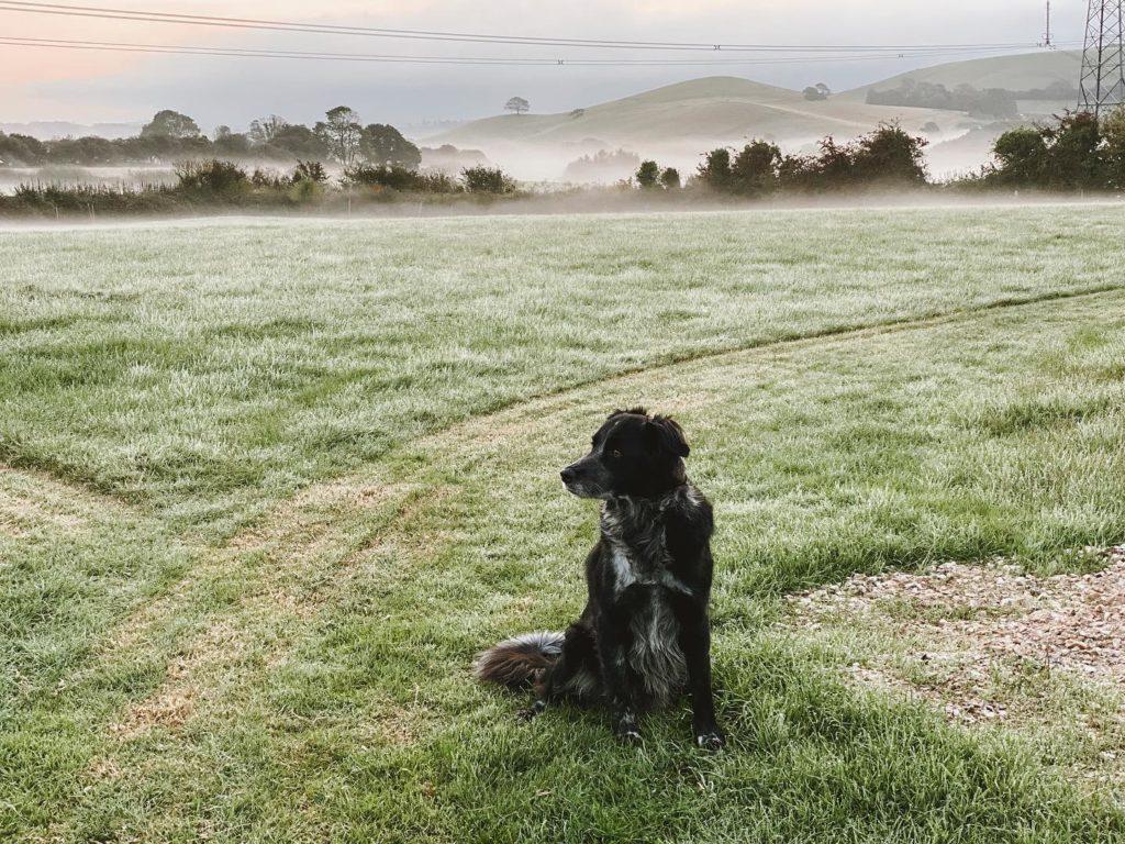 Outbuildings in Bridport, Dorset - farm dog
