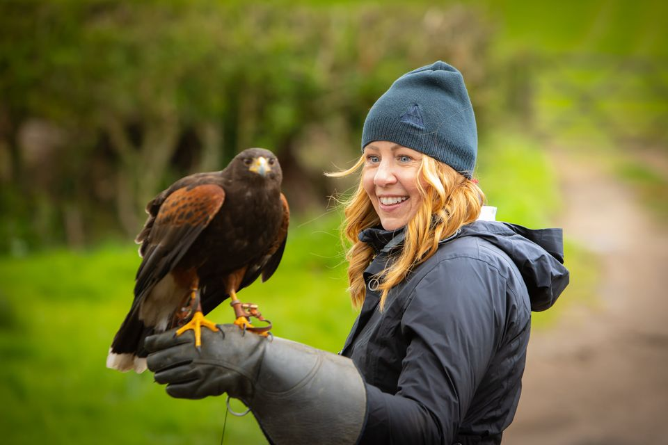 Walks with Hawks, Cheltenham - adult with eagle