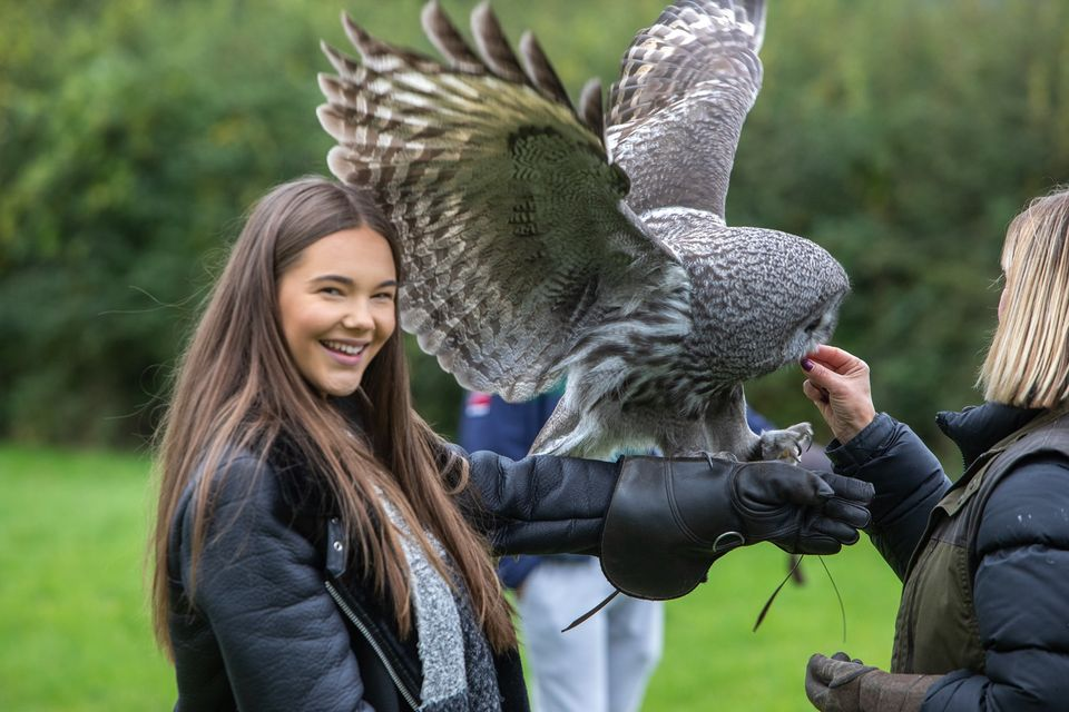 Walks with Hawks, Cheltenham - young adult with owl