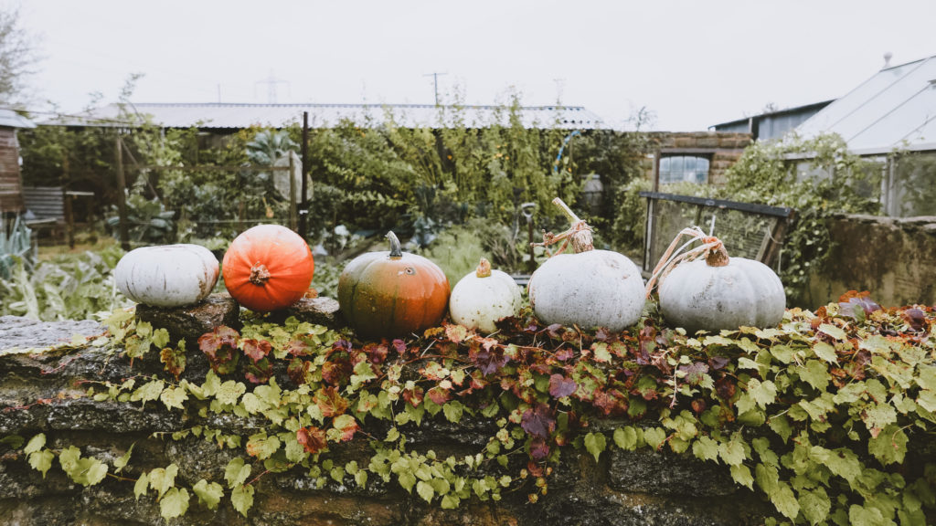 pumpkins on a wall at the Outbuildings self-catering studios in Dorset