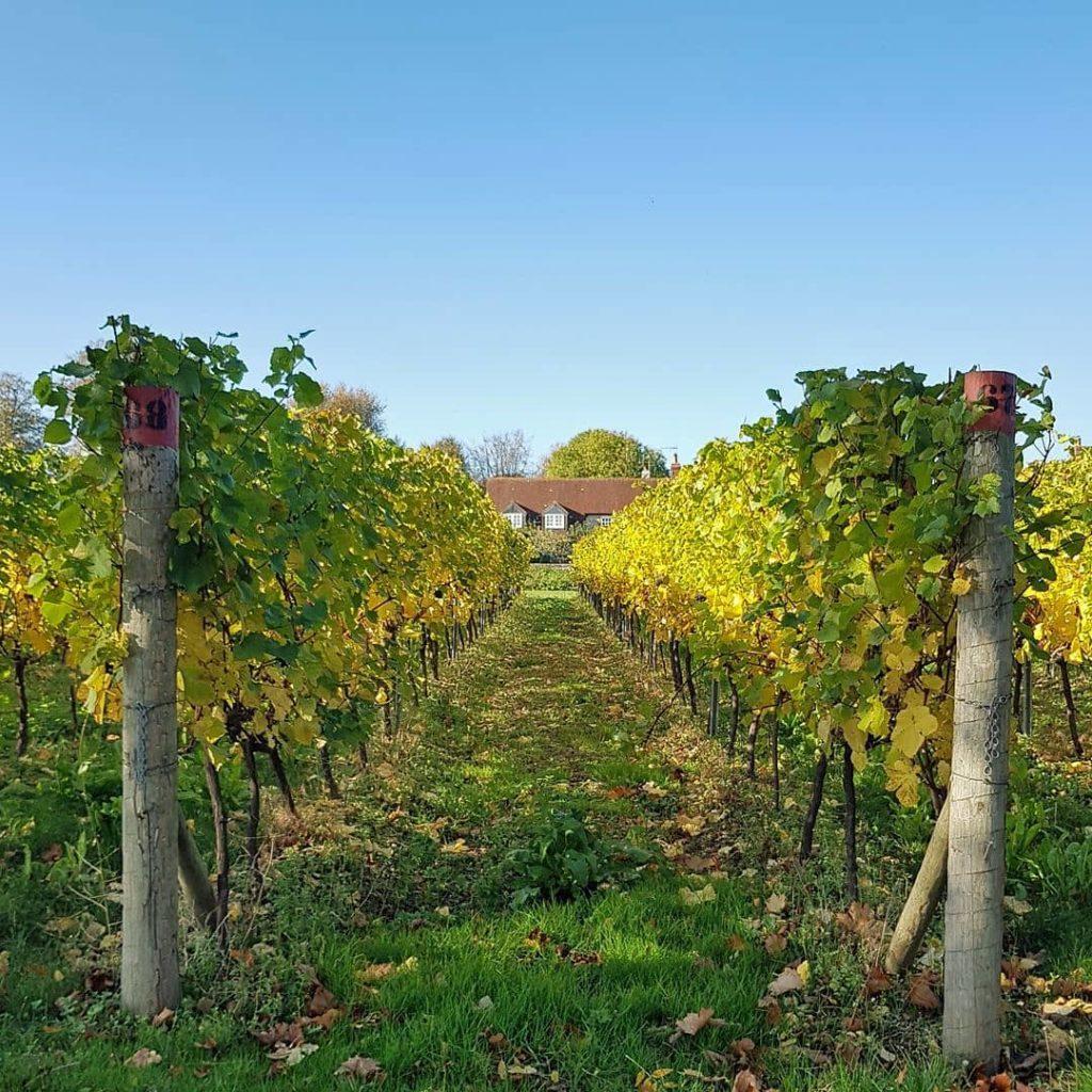 Halnker-Tree-tunnel-Walk-Local-Vineyard