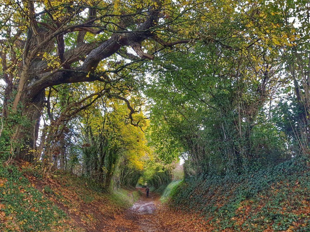 Halnker-Tree-tunnel-Walk-Local-Pub