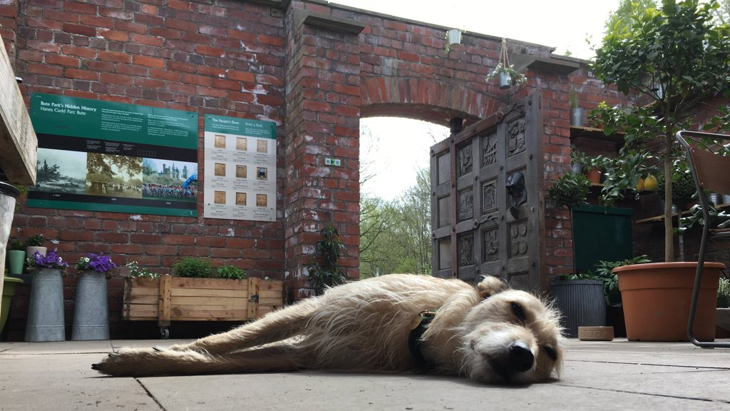 secret garden cafe in cardiff - dog having a nap