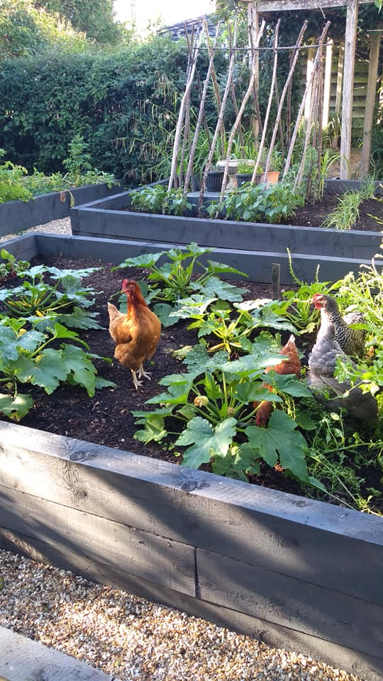 bakehouse west sussex - glamping and baking experiences - chickens in grounds