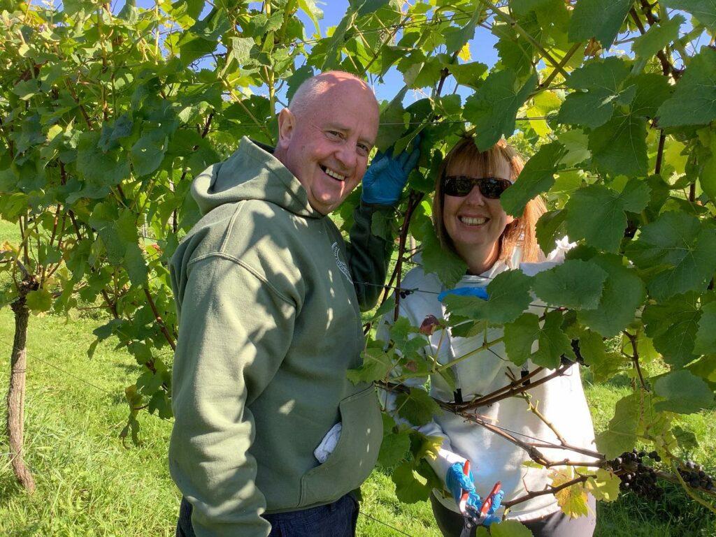 White castle vineyard in Wales: vineyard tour