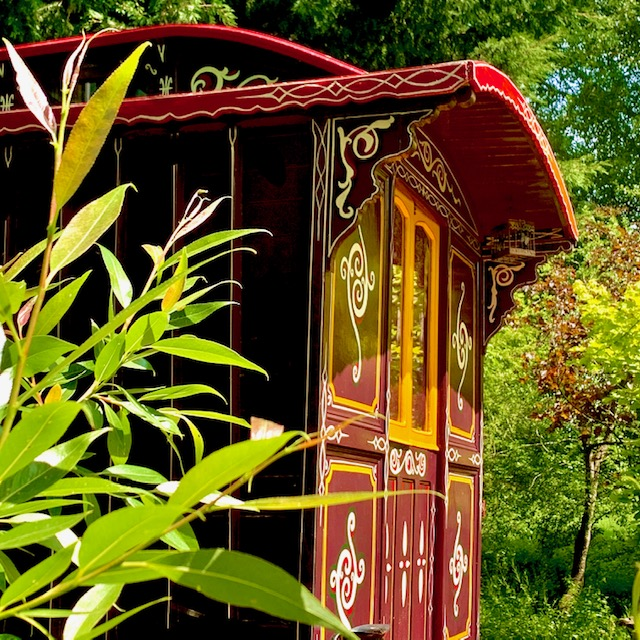 The Meadow Glamping in Hampshire - wild billy's gypsy caravan