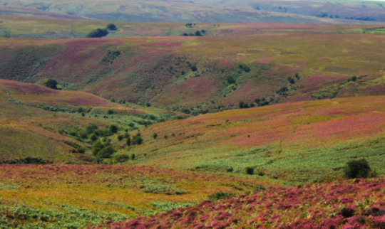 Red stag safari exmoor - moors and heather